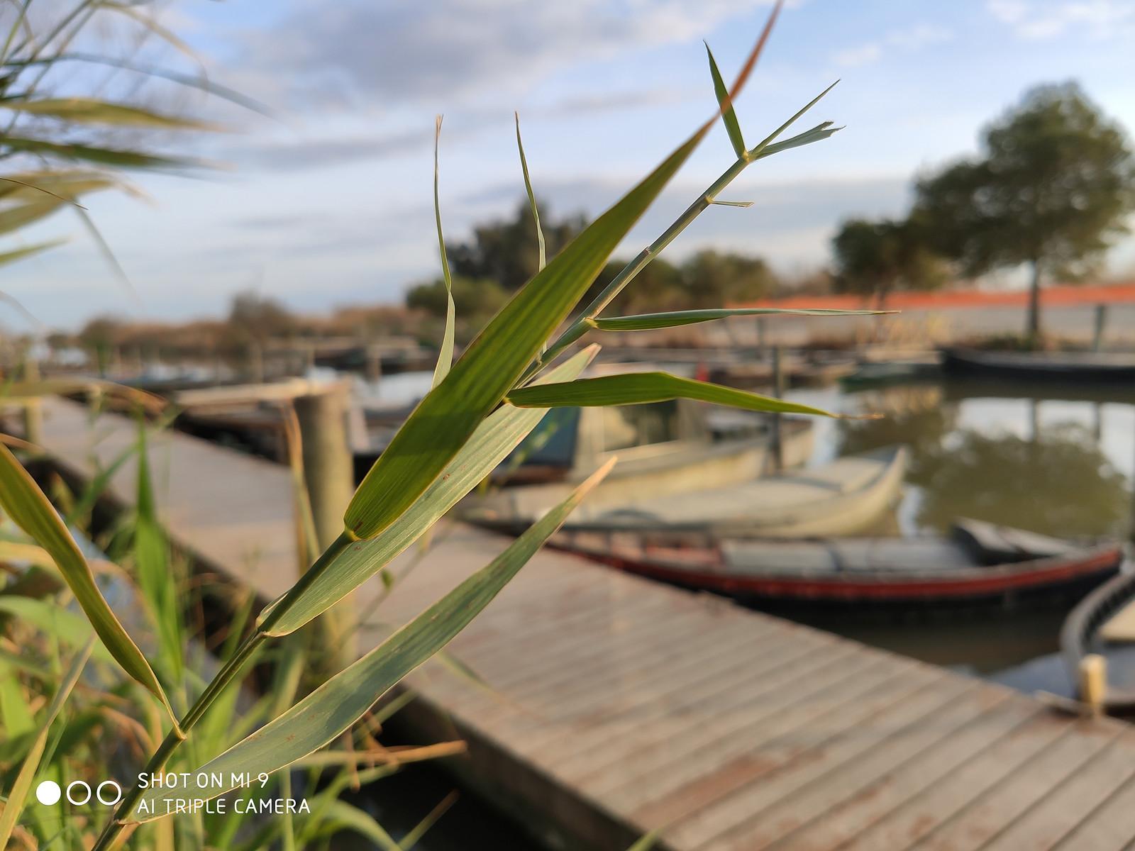 Foto de Xiaomi Mi 9, fotografías (43/54)