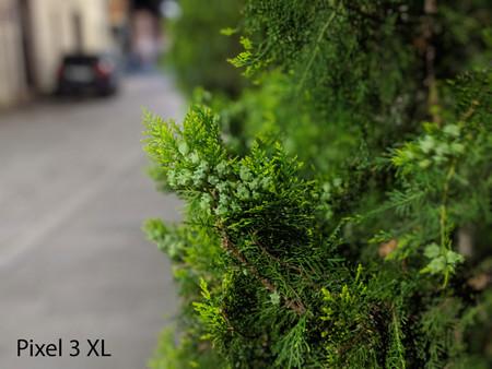 Pixel 3 Xl Retrato Noche