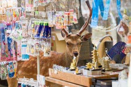 Planet Deer Yoko Ishii 8