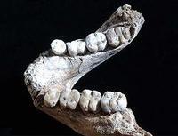 Hallada una dentadura de Australopithecus