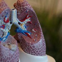 Así es como se disuelve un misterio de siglo y medio sobre el origen del asma y las enfermedades alérgicas e inflamatorias