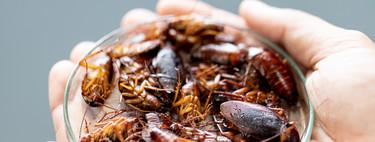 Esta es la verdadera comida del futuro: hamburguesa de carne de insecto creada en laboratorio