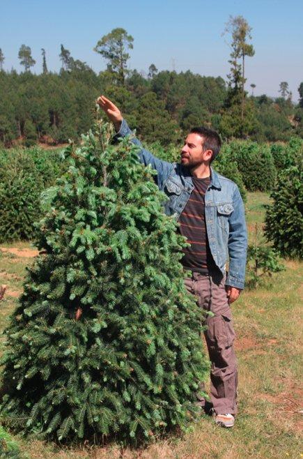 Ayuda al planeta y renta tu árbol de navidad.