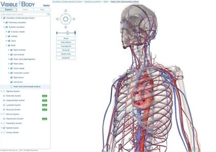 Visible Body, explorando el cuerpo humano en 3D