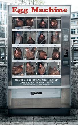 Maquina huevos
