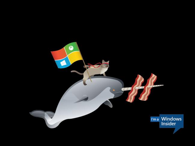 Windows Insider Ninjacat Narwhal 1024x768 Desktop1
