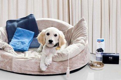 No sin mi perro (por cortesía del Hotel ME de Barcelona)