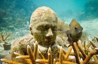 MUSA (Museo Subacuático de Arte), la nueva barrera coralina del Caribe