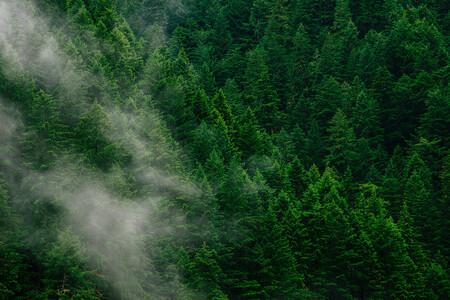 Plantar Arboles Para Disminuir La Huella De Carbono