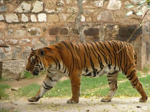 Foto de Caminos de la India: Jaipur (11/19)