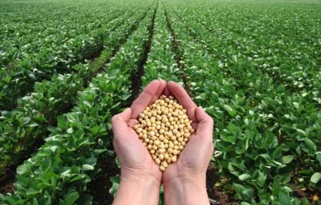 Soja: la gran aliada para conseguir una alimentación rica en proteínas vegetales