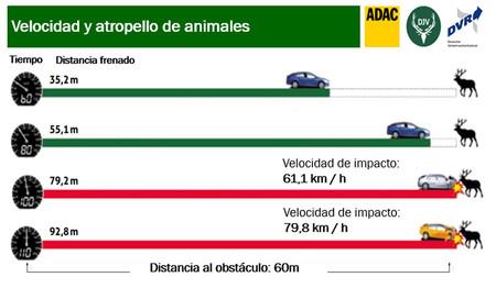 Velocidad Y Atropello De Animales