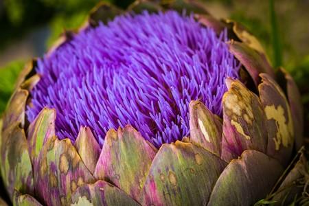 Te vas a sorprender: estas verduras en realidad son flores