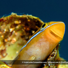 Foto 33 de 34 de la galería underwater-competition en Xataka Foto