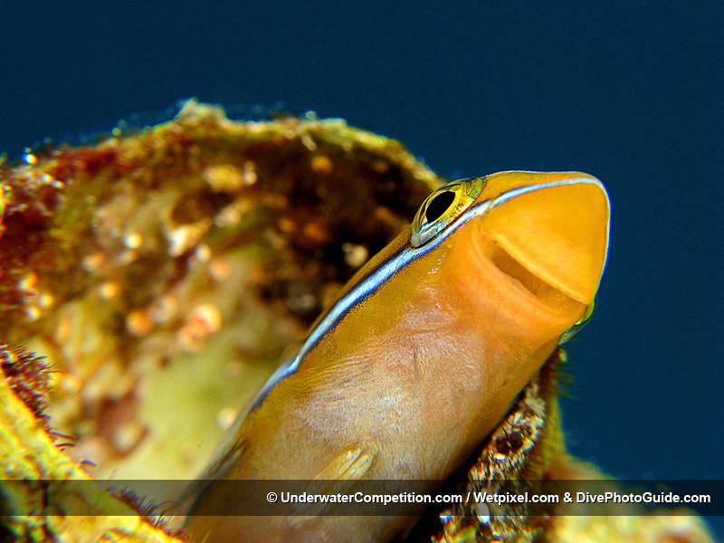 Foto de Underwater competition (33/34)