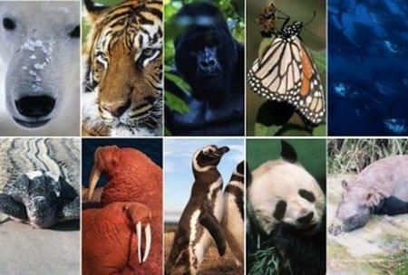 Internet como forma de acelerar la extinción de especies animales