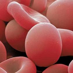 Nuevo método para convertir diferentes grupos sanguíneos en el grupo universal O positivo