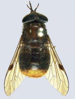 CSIRO nos presenta a la Destiny`s fly