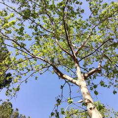 Foto 4 de 24 de la galería huawei-p20-lite en Xataka