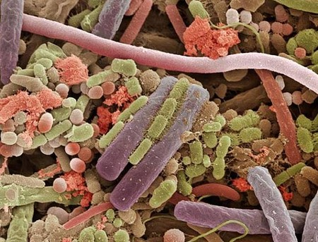 Bacteria On The Surface Of A Human Tongue