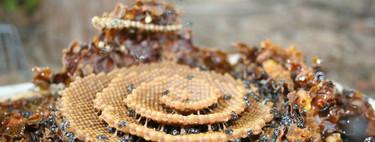 Эти пчелы строят свои ульи по спирали, и никто, кажется, не знает, почему