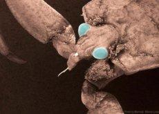 Las 7 cosas que hemos aprendido al entrar a una cueva cerrada durante 5 millones de años