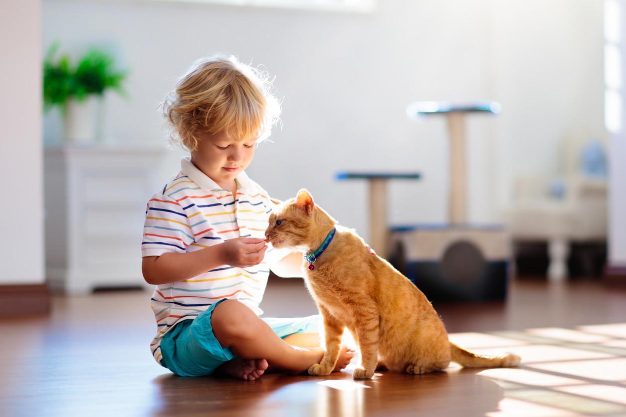 La Muerte De La Mascota Cómo Ayudar Al Niño A Superar La Pérdida De Su Fiel Amigo