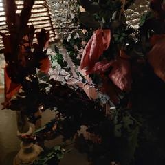 Foto 4 de 45 de la galería pocophone-f1-fotografias en Xataka