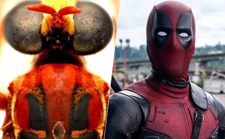 Australia ha descubierto nuevos y abominables insectos y los ha bautizado con nombres de Marvel