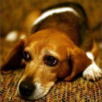 No debemos pasar por alto la crueldad hacia los animales
