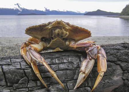Hemos acidificado los océanos. Y ya se están disolviendo los caparazones de algunas especies de cangrejos
