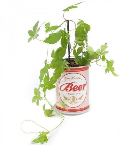 Planta de tu bebida favorita