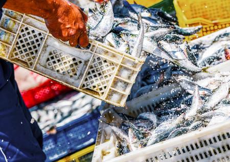El pescado es el nuevo petróleo: cinco motivos por los que este alimento es un recurso cada vez más valioso