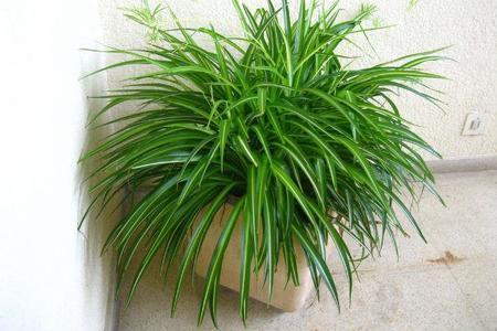 Las once mejores plantas de interior - Arbustos de interior ...