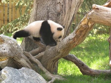 Xing Bao