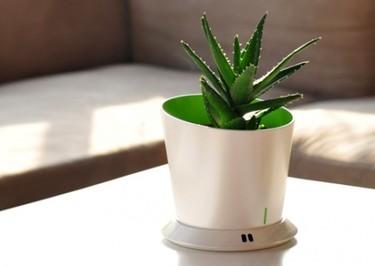 MonPot, te recuerda cuándo regar tus plantas de interior