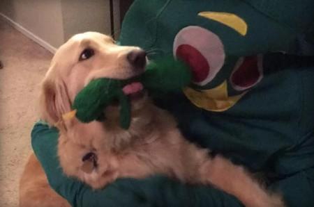 La reacción de la perra ante su dueño disfrazado de su juguete favorito no es lo que nosotros creíamos