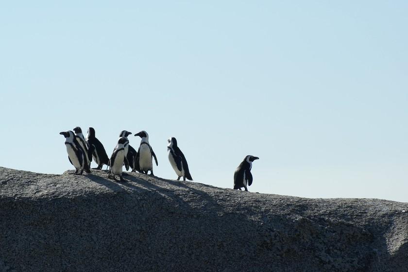 Distrochooser te ayuda a elegir la distribución Linux que más te conviene