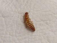 Singularidades extraordinarias de animales ordinarios (XLV): la termita