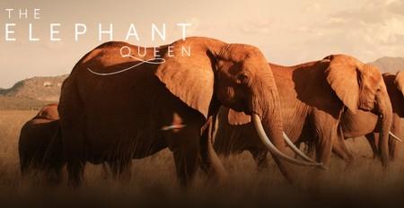 The Elephant Queen Apple TV