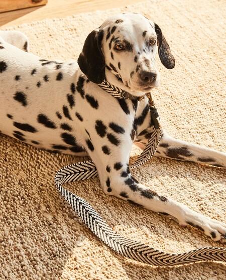 Zara Home sigue apostando por mimar a nuestras mascotas y amplía su colección con todo lo que nuestros perros y gatos necesitan