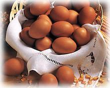 Huevos de gallina para prevenir la caries humana