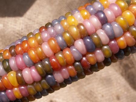 Maiz Multicolor 3