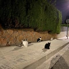 Foto 21 de 23 de la galería iphone-11-modo-noche en Xataka