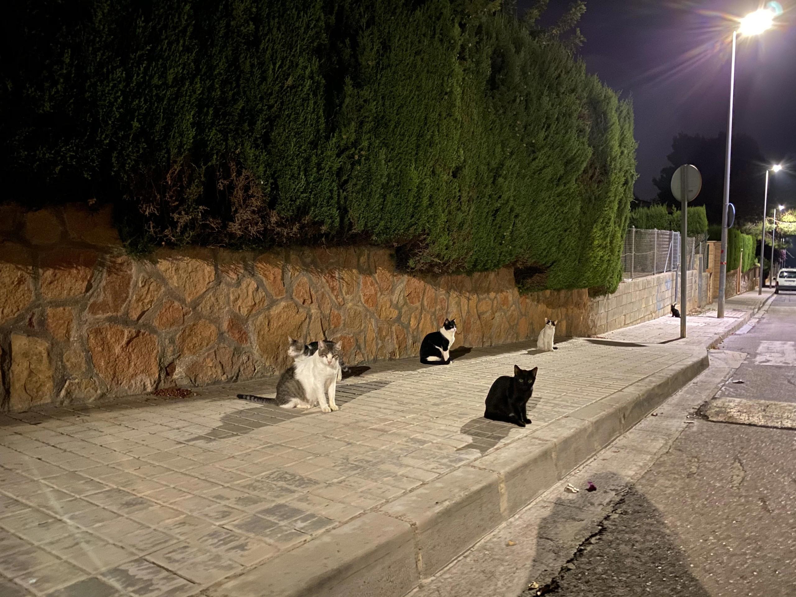 Foto de iPhone 11, modo noche (21/23)