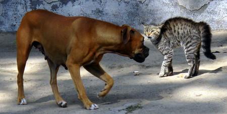 La guerra más larga, salvaje y sin cuartel del reino animal no es cosa de humanos, sino de perros y gatos