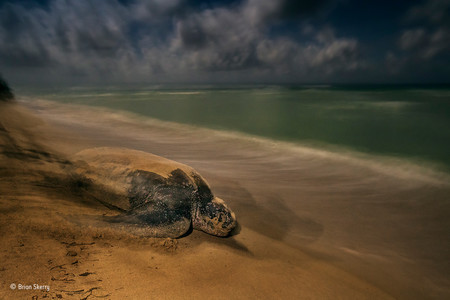 The Ancient Ritual Brian Skerry Wildlife Photographer Of The
