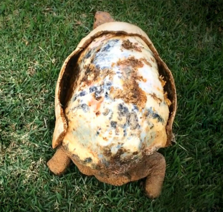 Tortoise 3d Printed 01