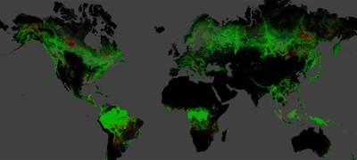 Mapa interactivo que muestra la pérdida forestal del planeta Tierra