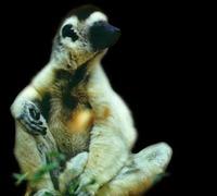 Madagascar: Atsinanana en la lista de Patrimonio de la Humanidad